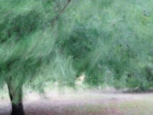 4-14-stormy-oaks